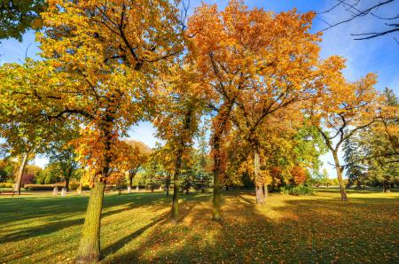 Картинки парк, деревья, осень, трава