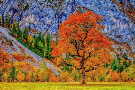 Фотографии Осень, деревья, листва, гора
