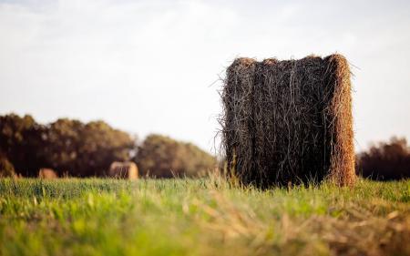 Фото Природа, поле, трава, стог сена