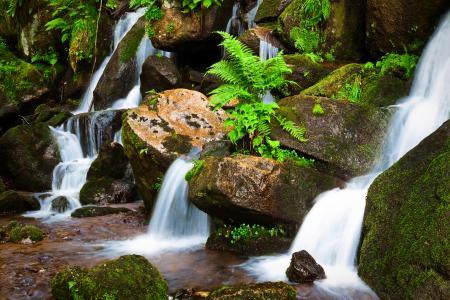 Фотографии лес, ручей, река, камни