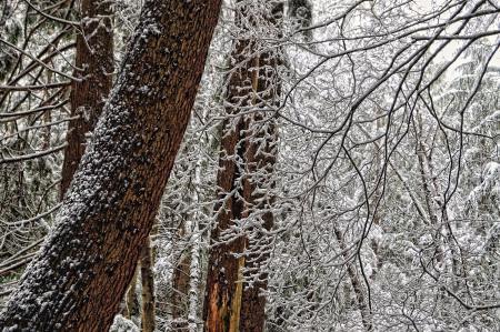Обои лес, деревья, ветки, стволы