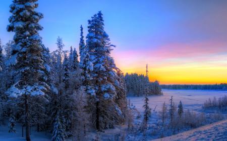 Заставки небо, закат, лес, ель