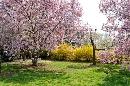 Обои сад, парк, деревья, цветы