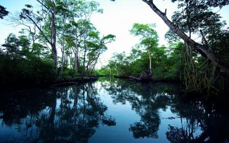 Фотографии лес, река, сумерки, отражение