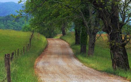 Фотографии природа, пейзажи, дерево, деревья