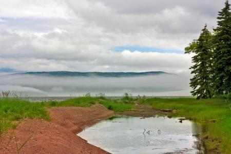 Фото туман, река, лужа, пруд