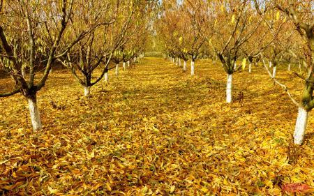 Фото осень, сад, листья, деревья