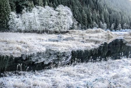 Фотографии зима, иней, деревья, река
