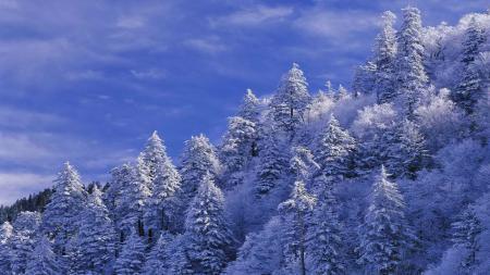 Фото небо, облака, склон, деревья