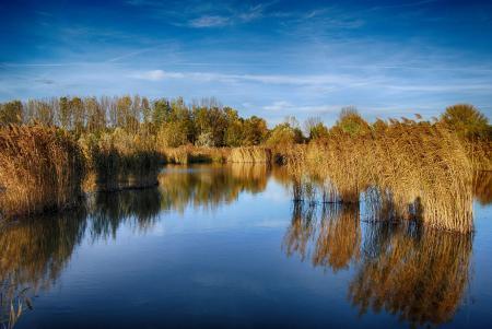 Фото озеро, деревья, трава, отражение