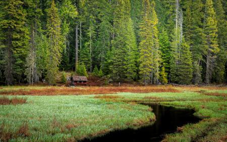 Фотографии лес, деревья, ель, домик