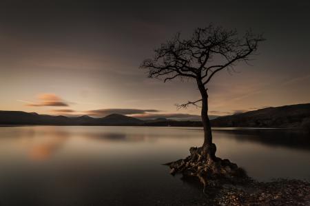 Заставки горы, озеро, дерево, рассвет