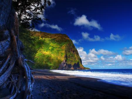 Фото hawaii, гаваи, небо, дерево