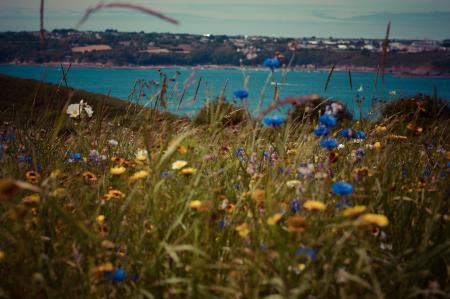 Картинки цветы, трава, вид, море