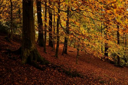 Фото лес, деревья, листья, осень