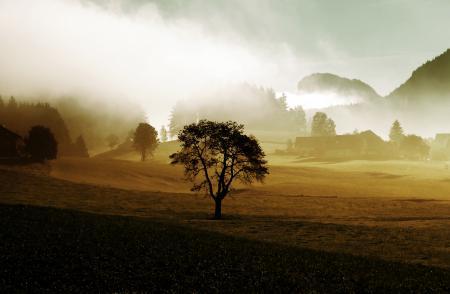 Фото дерево, сопки, ферма, деревья