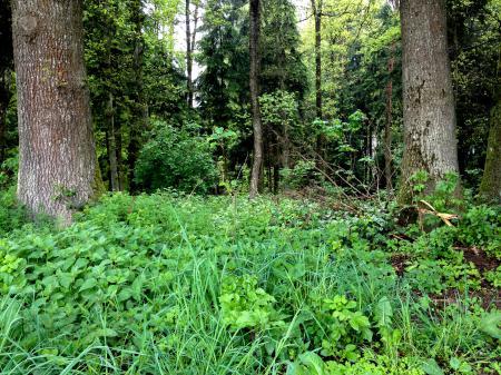 Обои лес, деревья, трава, заросли