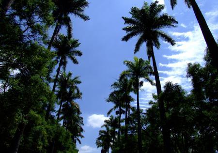 Обои лето, пальмы, небо