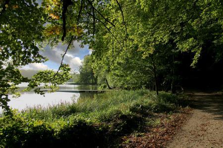 Заставки лес, деревья, дорога, озеро