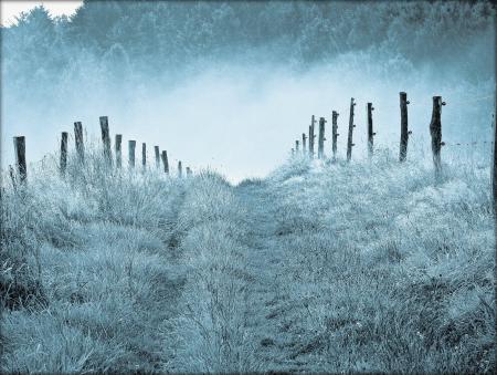 Фото природа, утро, туман