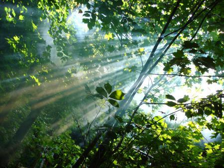 Обои Лучи, солнце, лес, деревья