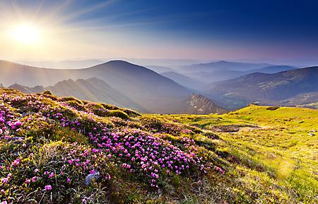 Картинки фиолетовые цветы, солнечное сияние, горы, утро