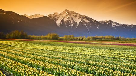 Обои природа, горы, пейзаж, цветы