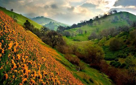 Заставки холмы, поле, цветы, деревья