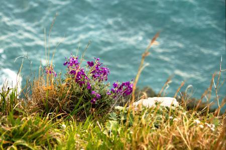 Обои вода, трава, цветы, полевые