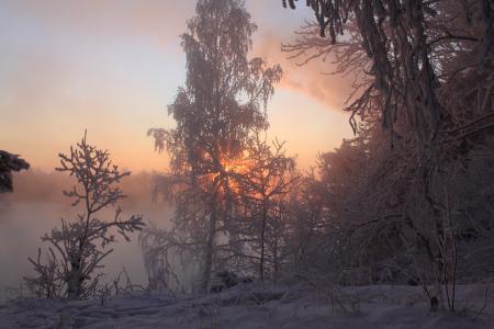 Фотографии зима, снег, деревья, ветки