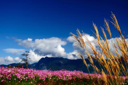 Фото макро, природа, горы, облака