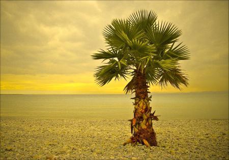 Фотографии ницца, море, дерево, пляж