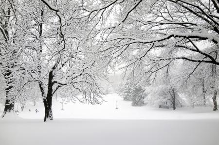 Заставки зима, природа, парк, деревья
