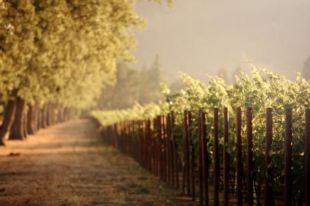 Фотографии природа, дорога, виноградники, небо