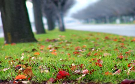 Фотографии газон, опавшие листья, разноцветные, трава