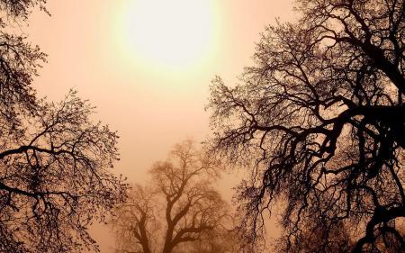 Картинки природа, пейзаж, закат, деревья