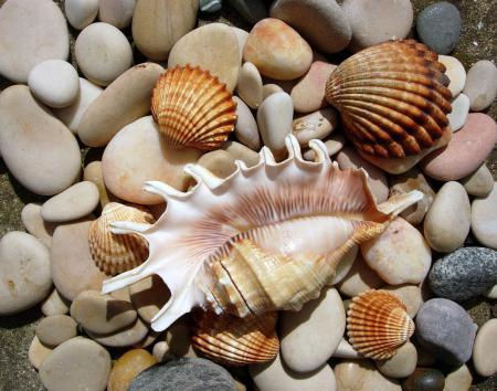 Обои природа, морской мир, ракушки, камни