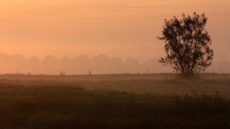 Заставки природа, пейзаж, дерево, туман