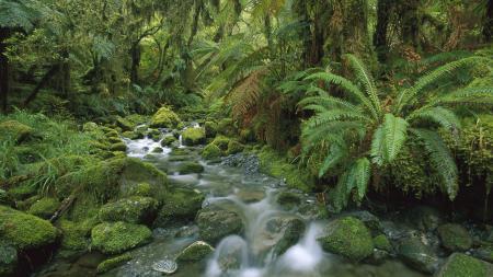 Обои Новая Зеландия, лес, папоротники, река