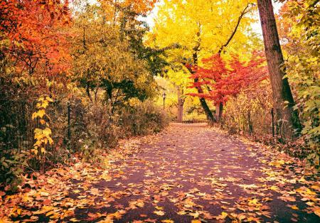 Обои осень, природа, парк, дорога