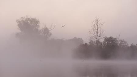 Фотографии озеро, туман, ночь, птицы