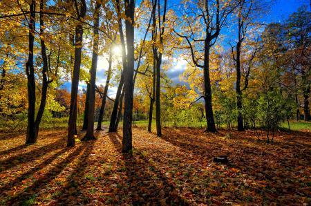 Заставки деревья, стволы, солнце, листья