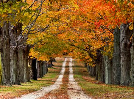 Обои природа, осень, дорога, деревья