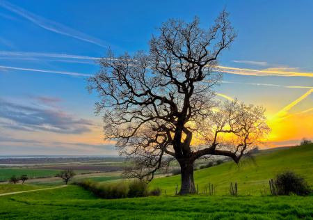 Фото природа, дерево, поле, закат