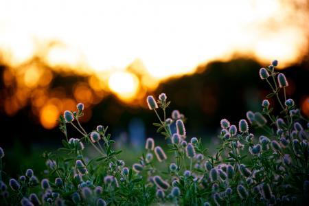 Обои природа, лето, растения, вечер