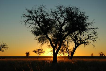 Заставки природа, пейзаж, вечер, дерево