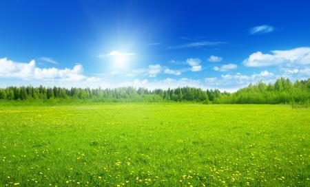 Фото поле, цветы, деревья, облака