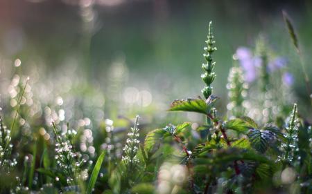 Обои трава, природа, свет