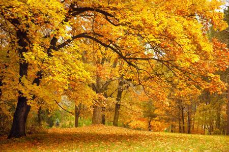 Заставки желтые листья осенний лес