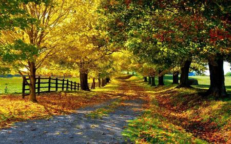 Заставки золотая пора, желтые листья, деревья, аллея